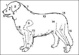 anatomi1